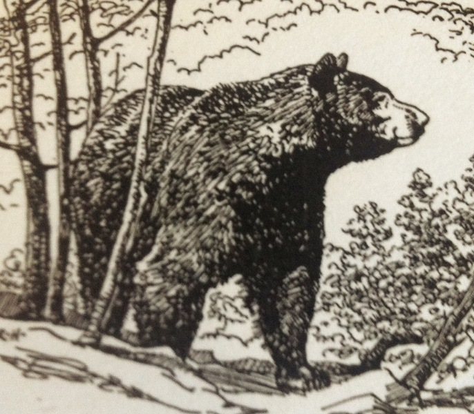 American Black Bear, from the Ohio Conservation Bulletin (1946).
