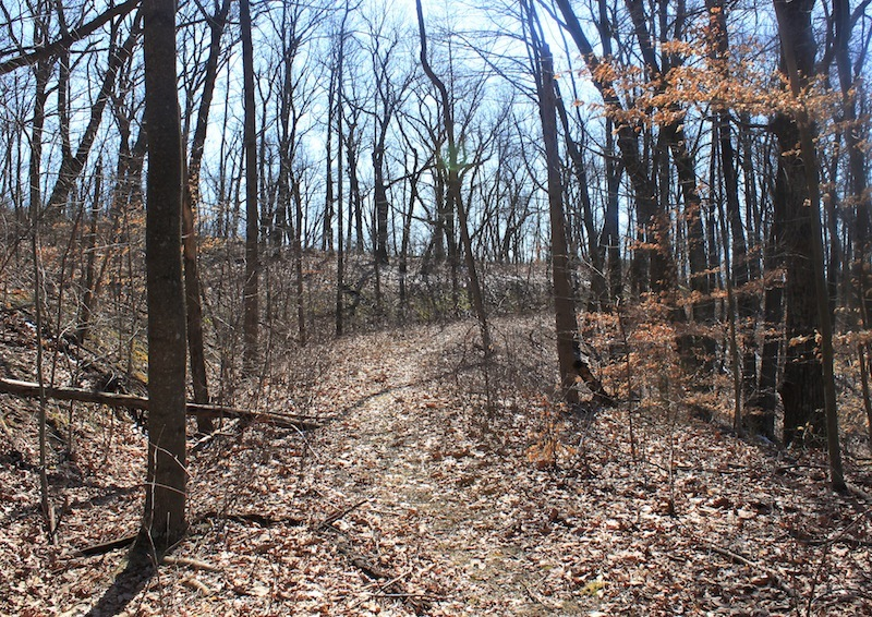 Buckhorn Ridge Bridal Trail, Shawnee Wilderness Area, Scioto County, Ohio (2012).