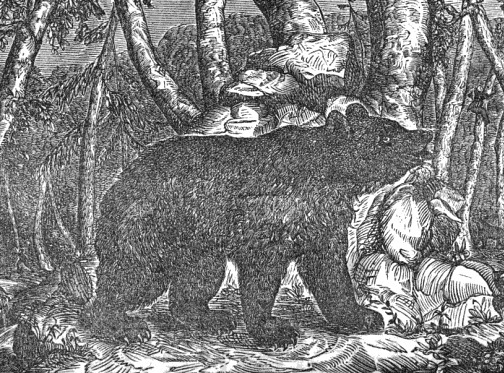 "American Black Bear, from James Finley's ""Pioneer Life in the West"" (1856)"